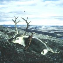 1980-ban, Grönlandon